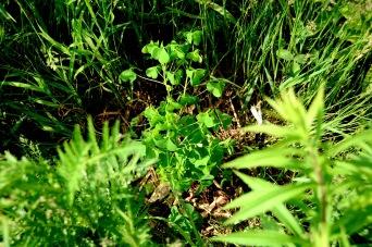 Shauna Janssen_Caroline's plant DSC_0811 sm